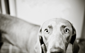 Picture eyes, photo, surprise, dog