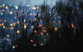 Picture grass, light, the city, the bushes, bokeh