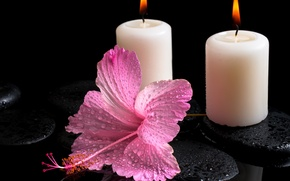 Picture flower, water, drops, candles, hibiscus, Spa stones