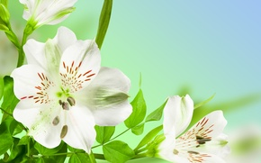 Wallpaper flowers, beauty, stems, leaves, white, freshness, leaves, freshness, green, spring, white, beauty, Flowers, stems, green, ...