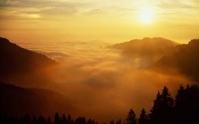 Wallpaper fog, the sun, trees