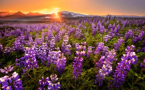 Picture field, sunset, flowers, mountains, panorama