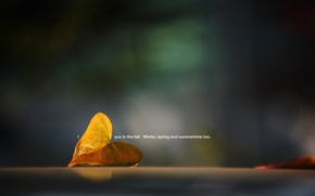 Picture macro, sheet, photo, background, the inscription, Wallpaper, plant, picture, fallen, i you in the fall. ...