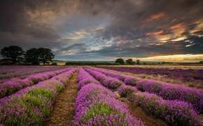 Picture field, clouds, sunset, nature, England, UK, lavender, Hampshire County