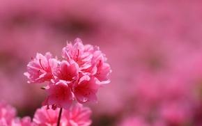 Wallpaper flowers, nature, plant, petals, inflorescence