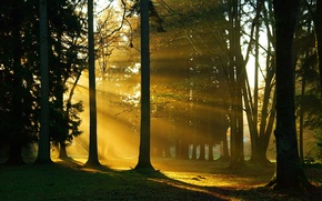 Wallpaper sunlight, nature, trees, branches, forest, trunks