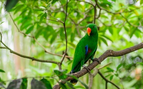 Picture forest, leaves, bird, branch, feathers, beak, parrot