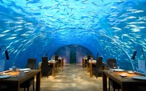 Picture design, style, interior, restaurant, The Maldives, the hotel, under water, maldives, hilton rangali