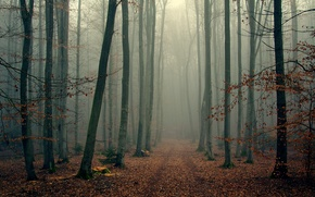 Picture autumn, forest, trees, branches, fog, foliage, wood, foggy