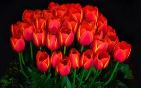 Picture light, background, petals, garden, tulips