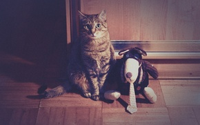 Picture Toy, Cat, Funny