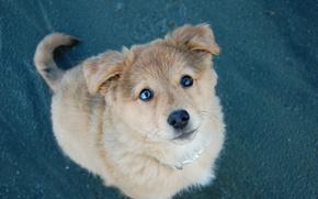 Wallpaper dog, look, puppy