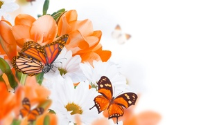 Wallpaper flowers, white chrysanthemums, twigs, butterfly, orange flowers, buds