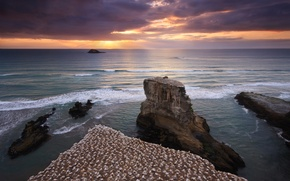 Picture sea, the sky, water, sunset, birds, rocks, shore, New Zealand