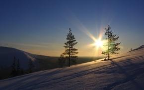 Wallpaper the sun, trees, the sky, Snow