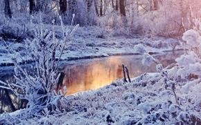 Picture winter, snow, lake