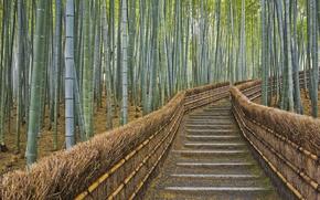 Wallpaper fence, bamboo, Japan, Kyoto, path
