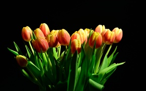 Picture light, background, tulips, Black, background, Tulips
