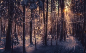 Picture winter, forest, snow, trees, hdr, the rays of the sun