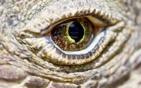 Picture eye, reptile, scales, komodo dragon