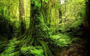 Picture greens, forest, trees, tropics, moss, jungle, Jungle, the bushes