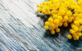 Picture flowers, Board, spring, Mimosa