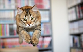 Wallpaper cat, look, jump