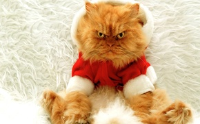 Picture cat, large, red, New year, evil