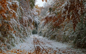 Picture road, autumn, leaves, trees, October, the first snow