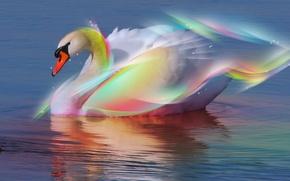 Wallpaper Water, Swan, Rainbow