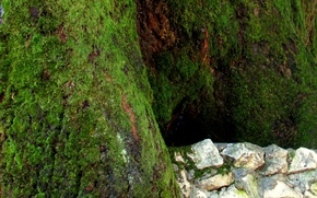 Picture stones, tree, Moss, Logins