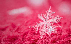 Wallpaper macro, snowflake, background