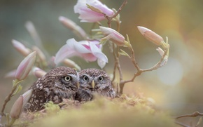 Picture flowers, birds, branches, nature, owls, a couple, buds, Chicks, owlets