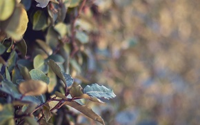 Picture leaves, macro, branches, nature