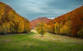 Picture Nature, Autumn, Trees