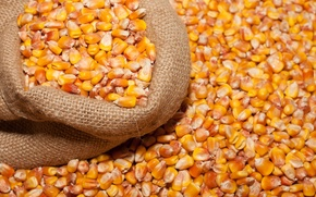 Wallpaper beans, bag, corn