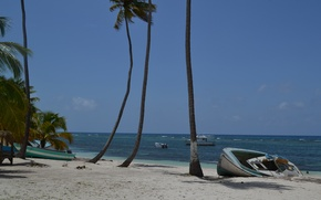 Picture sea, beach, Palma, palm trees, stay, Dominican Republic