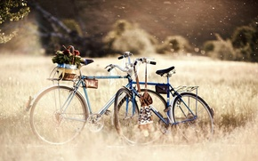 Picture greens, grass, trees, flowers, nature, bike, great, background, Wallpaper, mood, plants, blur, day, wheel, wallpaper, …