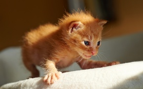 Picture cat, kitty, first steps