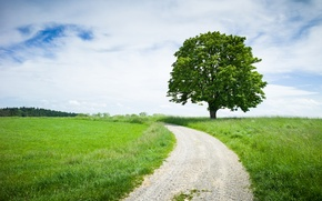 Picture The sky, Tree, Road, Grass