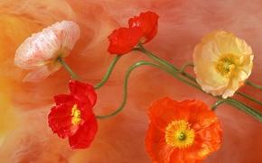 Wallpaper flowers, paint, midway, brightness, color, figure, petals, stem, Maki