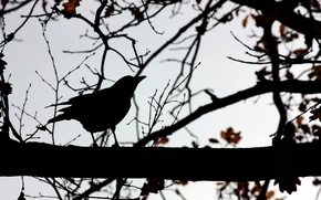 Picture TREE, The SKY, BIRD, BRANCH, SHADOWS, SILHOUETTE, CONTOUR, OUTLINE