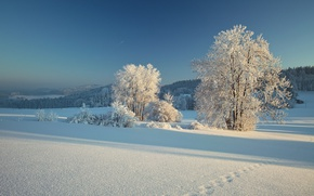 Picture winter, snow, trees, traces, Germany, Bayern, Germany, Bavaria, Bavarian Forest, Bavarian Forest