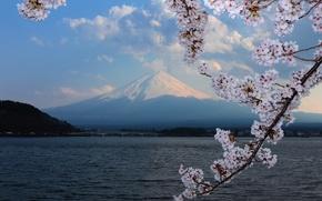 Picture background, mountain, Sakura, flowering, Fuji