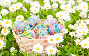 Picture field, flowers, chamomile, eggs, Easter, flowers, spring, Easter, eggs