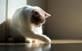 Picture cat, light, comfort, torode