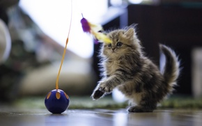 Picture house, toy, ball, feathers, fluffy, floor, Daisy, Ben Torode, Benjamin Torode