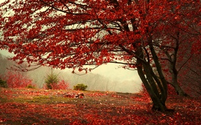 Picture autumn, forest, leaves, trees, branches, nature, fog, tree, tree, hill, red, Burgundy