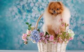 Picture flowers, basket, Spitz