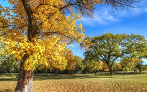 Picture autumn, the sky, grass, leaves, trees, Park